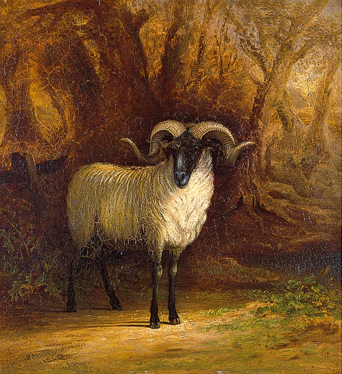 The Norfolk Sheep a portrait P Nursey 1846pcf0867